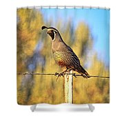 Barbed Wire Quail Shower Curtain