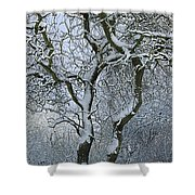 Bare, Snow-covered Tree In Winter Shower Curtain