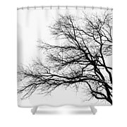 Bare Tree Silhouette Shower Curtain