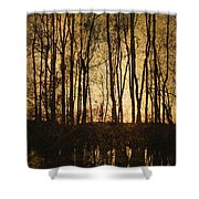 Fall Trees On A Lake Shower Curtain