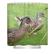 Barefoot Stroll In The Grass Shower Curtain