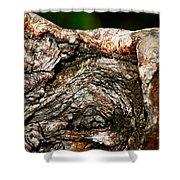 Bark Shower Curtain by Christopher Gaston