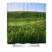 Barley, Co Down Shower Curtain