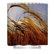 Barley, Co Meath, Ireland Shower Curtain
