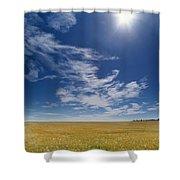 Barley Field Near Airdrie, Alberta Shower Curtain
