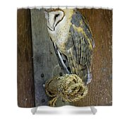 Barn Owl At Roost Shower Curtain