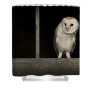 Barn Owl In Window Shower Curtain