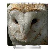 Barn Owl Portrait Shower Curtain