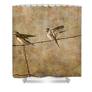 Barn Swallows On Barbed Wire Fence Shower Curtain