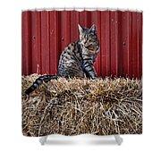 Barnyard Cat Shower Curtain