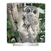 Barred Owl II Shower Curtain