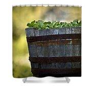 Barrel Of Collards Shower Curtain