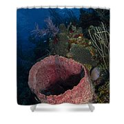Barrel Sponge Seascape, Belize Shower Curtain