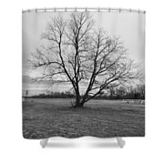 Barren Tree On A Winters Day Shower Curtain