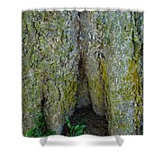 Base Of The Tree View Shower Curtain