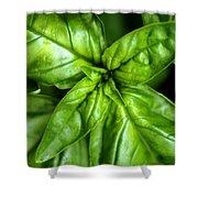 Basil Squared Shower Curtain