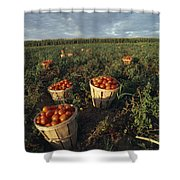 Baskets Of Fresh Tomatoes In A Field Shower Curtain