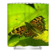Basking Butterfly  Shower Curtain
