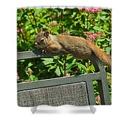 Basking Squirrel Shower Curtain