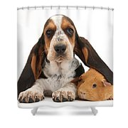 Basset Hound And Guinea Pig Shower Curtain