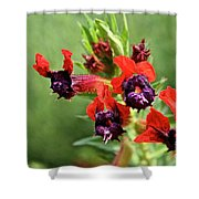 Bat Face Cuphea Shower Curtain