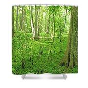 Baton Rouge Blueonnet Swamp  La Shower Curtain
