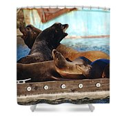 Battle For The King Spot Shower Curtain