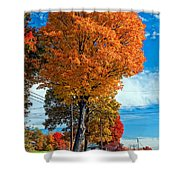 Battle Of The Maples 2 Shower Curtain