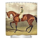 Bay Middleton Winner Of The Derby In 1836 Shower Curtain