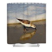Beach Bird Shower Curtain