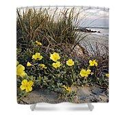 Beach Evening Primrose On Folly Beach - D001782 Shower Curtain