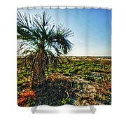 Beach Palm Morning Shower Curtain