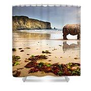 Beach Rhino Shower Curtain by Carlos Caetano