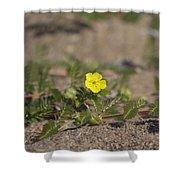 Beach Wildflower Shower Curtain