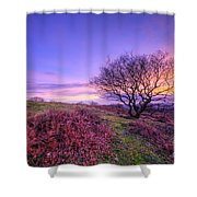 Beacon Hill Sunrise 1.0 Shower Curtain