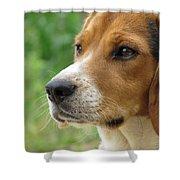 Beagle Gaze Shower Curtain