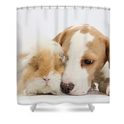 Beagle Pup And Alpaca Guinea Pig Shower Curtain