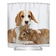 Beagle Pup And Rabbit Shower Curtain