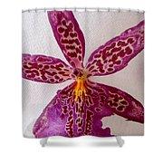 Beallara Marfitch - Howard's Dream - Orchid Shower Curtain