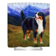 Bear - Bernese Mountain Dog Shower Curtain by Michelle Wrighton