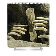 Bear Claws Shower Curtain