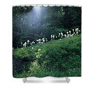 Bear-grass Ridge Shower Curtain
