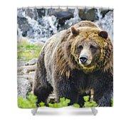 Bear On The Prowl. Shower Curtain