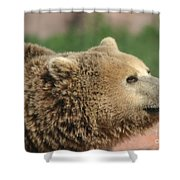 Bear Profile Shower Curtain