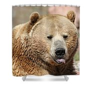 Bear Rasberry Shower Curtain