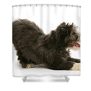 Bearded Collie Pup Shower Curtain