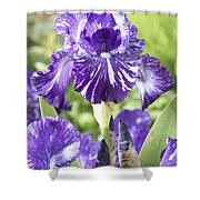 Bearded Iris Iris Germanica Batik Shower Curtain