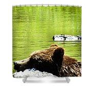 Bearly Swim Shower Curtain