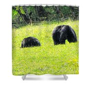 Bears In A Peaceful Meadow1 Shower Curtain