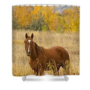 Beautiful Chestnut Horse Shower Curtain